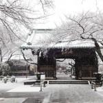 snow in Tokyo yutenji