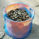 clamming buckets