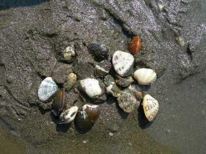 clamming clams