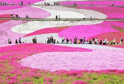 hitsujiyama park flowers golden week