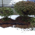 Snow in Tokyo garden
