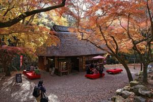 Nara_Mizutani-chaya1024